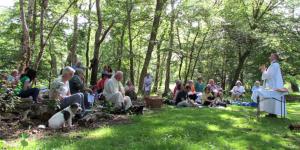 Woodland Mass