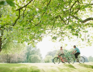 people cycling under trees